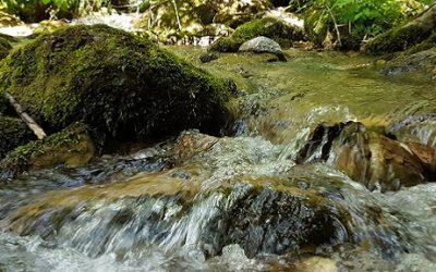 """Успеавме! Поништена е постапката за нова хидроцентрала во Националниот парк """"Маврово""""!"""
